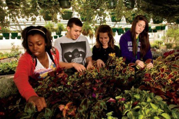 Escola Agrícola RN cursos técnicos 2017 10